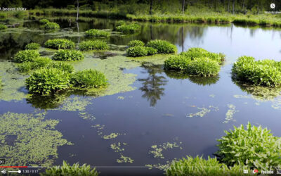 An Interview with Skip in the Native Wetlands of Grafton Vermont